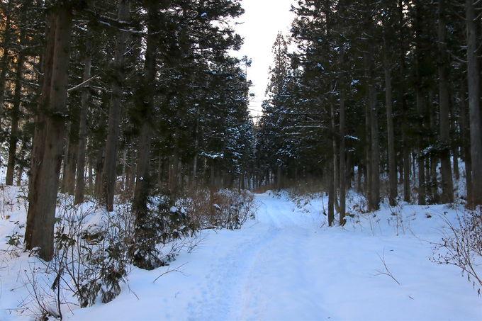 """「猪臥山」登山は""""猪臥山トンネル""""から!緩い林道歩きが特徴"""