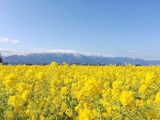 実は隠れた名山の宝庫!?滋賀・京都を隔てる「比良山地」