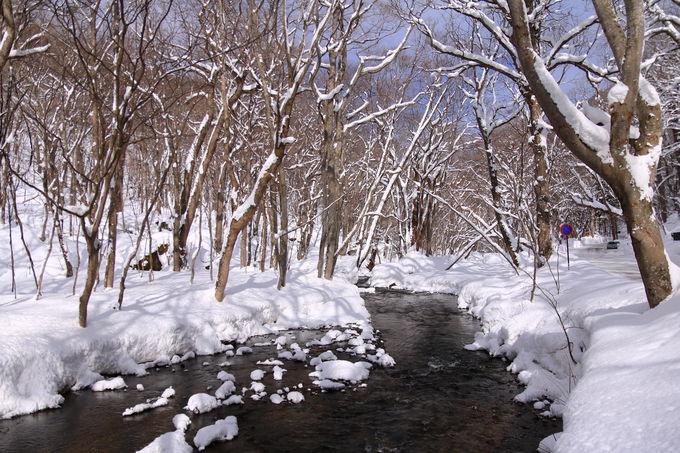 夏や秋と180度違う!冬の「奥入瀬渓流」の魅力