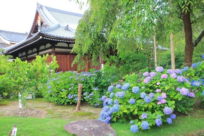 京都が誇る花の寺「法金剛院」紫陽花や蓮の名所