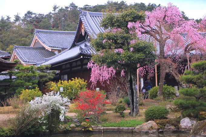穴場お花見名所!「法金剛院」で趣深い京の春を