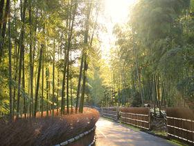 京都観光の穴場「乙訓」自然と歴史文化が紡ぐ絶景を巡る旅