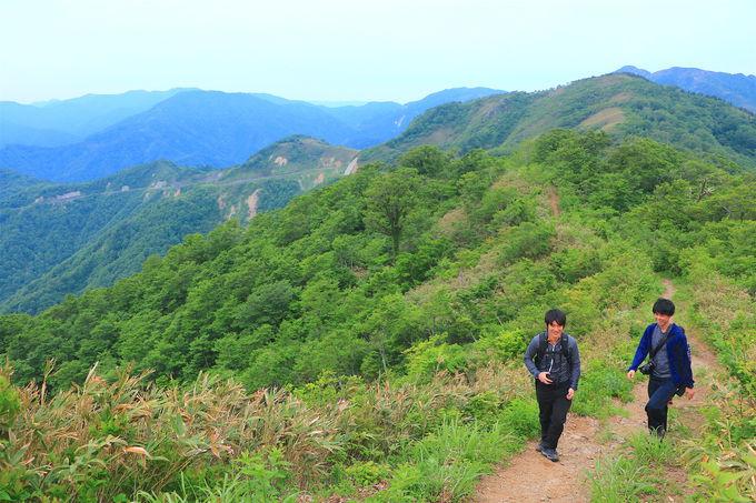 緑が溢れるブナ原生林を進む!非日常アドベンチャーの始まり