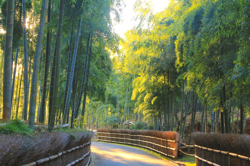 ディープな京都に触れる!乙訓「竹の小径」で癒しの竹林散策