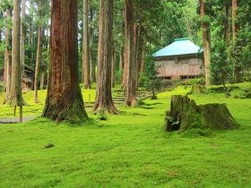 静謐な時間と苔の風景!福井「白山平泉寺」でパワーチャージ