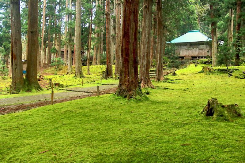 静謐な時間と苔の風景!福井「白山平泉寺」でパワーチャージ   福井県   LINEトラベルjp 旅行ガイド