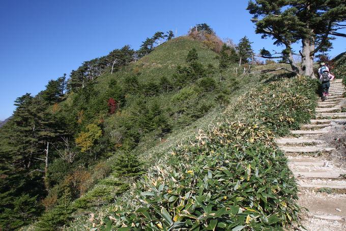 絶景道を上った先に!石鎚の山塊を仰ぐ「土小屋ルート」