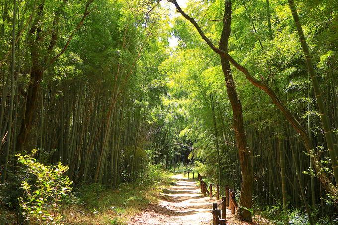 清々しくて美しい!池から竹林への爽快トレッキング