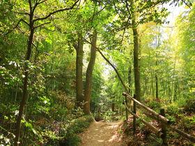 本当に名古屋?「猪高緑地」で癒しの里山・緑の絶景歩き