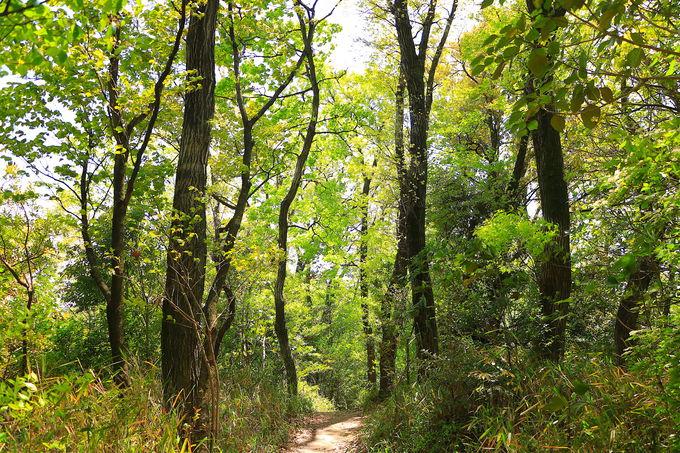 緑に心洗われる!プチ縦走路の原生林が美しい