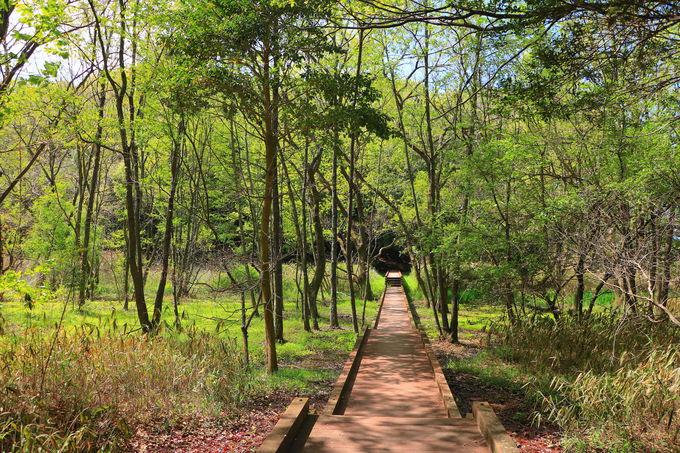「井堀分岐」から湿原地帯を歩く!棚田の風景も