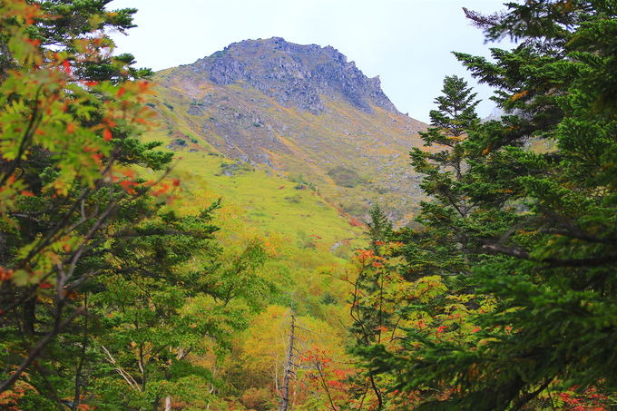 歩きやすい登山道!樹林帯に癒される焼岳前半
