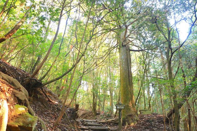 御門杉から展望台まで見所豊富!猿投山王道ルート