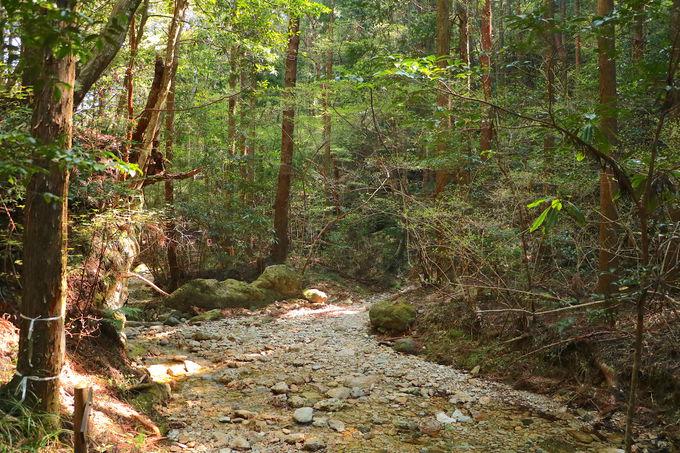 森林歩道から尾根、そして急登へ変化!正念場の中盤