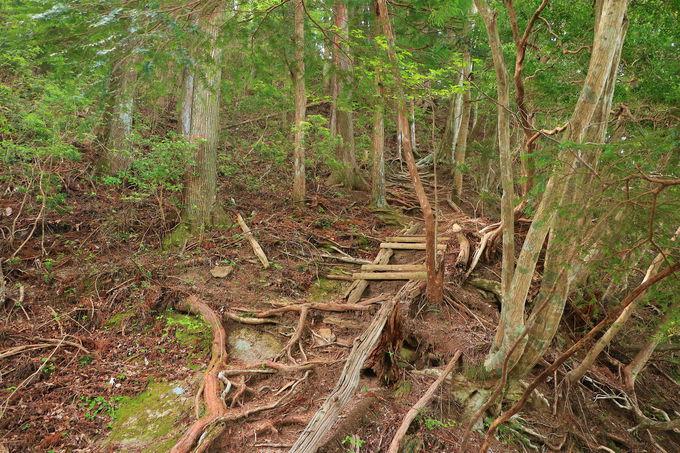 樹林帯から鎖場!短いながら変化に富んだコースを満喫