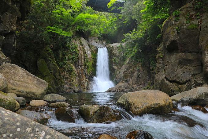 奥三河旅の二つのポイント!「花」と「滝」