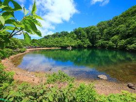 ニッコウキスゲの別天地!岐阜の秘境「夜叉ヶ池」ハイキング