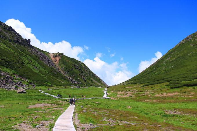 手軽に標高3000m峰の世界へ!高山植物の楽園「乗鞍岳」