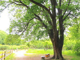 名古屋の中心から気軽にアクセス!相生山緑地「オアシスの森」の魅力