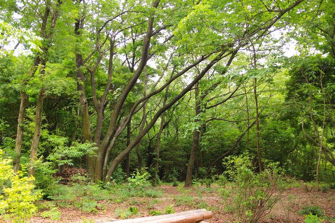 疲れた心を癒してくれる!相生山緑地「オアシスの森」