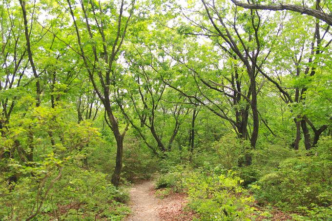 「いのちの谷」が美しい!緑たぎる絶景の小径