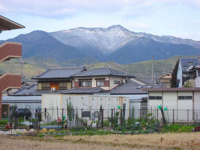 静謐な杉林の風情に癒される!京都で一番人気「愛宕山」