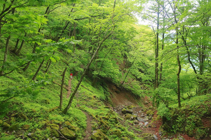 御池岳登山のメジャールートは二つ!鞍掛峠かコグルミ谷