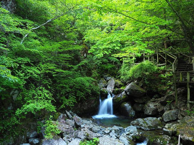 溢れる緑とマイナスイオン!極上の「森林浴回廊」を歩く
