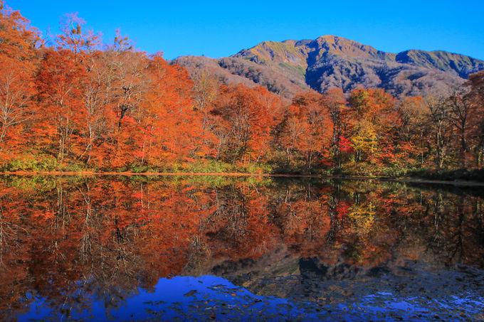 紅葉の時期は格別!錦の衣をまとう秋の「刈込池」
