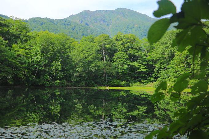 緑映り込む神秘の絶景!両白山地が作り上げた「刈込池」