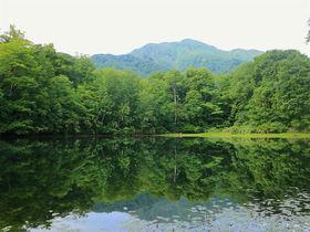 緑映える水鏡が美しい!越前大野の絶景「刈込池」散策ガイド