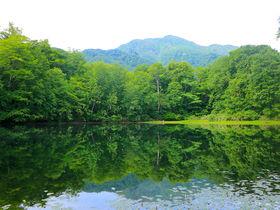 緑と紅葉どちらを見る?越前大野の神秘の絶景「刈込池」散策ガイド