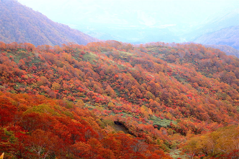 知られざる絶景紅葉の山!岐阜「銚子ヶ峰」ハイキング