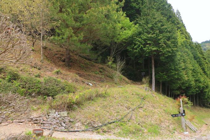 登山初心者なら、安心な鹿島・大鈴北部縦走ルートへ!