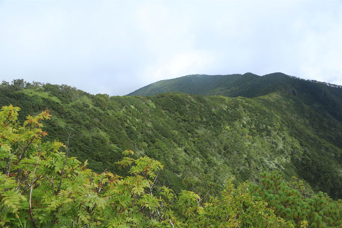 ハイマツの尾根歩きが楽しい!「藻琴山」ハイキング後半