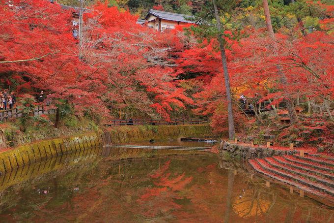 鳥原川沿いが鮮烈!橋と紅葉のコラボレーションも楽しもう