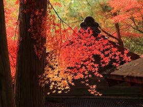 鮮烈な赤に彩られる!愛知・瀬戸の紅葉名所「岩屋堂公園」