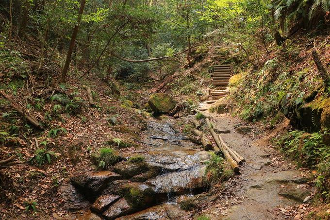 愛知高原国定公園が育む!素朴な「岩屋堂公園」