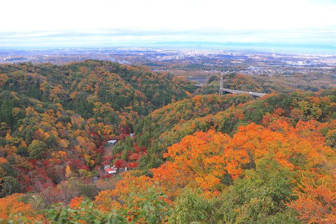 名古屋を一望!紅葉のパノラマが美しい「岩巣山展望台」