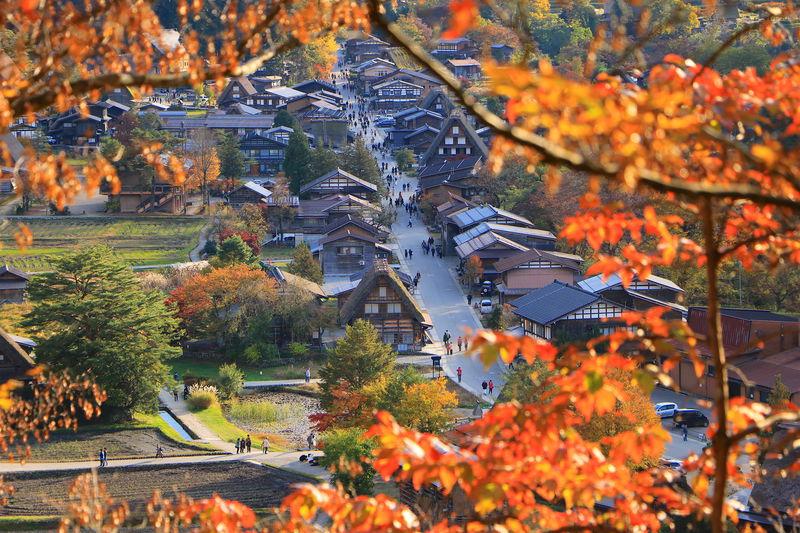全山紅葉に包まれる!世界遺産「白川郷合掌造り」秋の散策ガイド