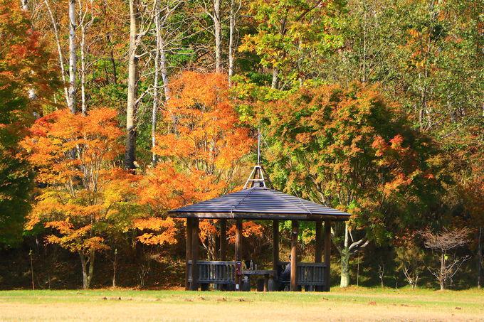 花崗岩と競り合う全山紅葉!「みずがき山自然公園」が絶景