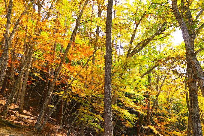 登山でなくても楽しめる!紅葉の瑞牆山へ軽ハイキング