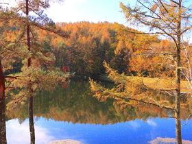 錦秋の風情香る!長野県「御射鹿池」周辺で絶景紅葉ハイキング