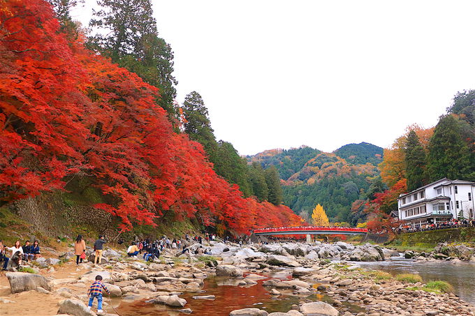 混雑回避で東海有数の紅葉を満喫しよう!