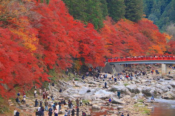 美しいけど、混みがちな秋の「香嵐渓」その攻略法は?