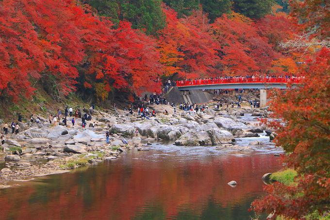 愛知・三河の紅葉名所「香嵐渓」混雑でも絶景を満喫する攻略法