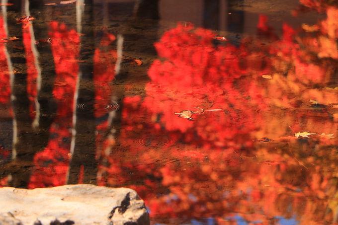 ひるがの高原ドライブ「分水嶺公園」で真紅の紅葉観賞