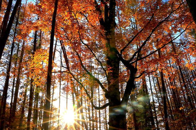 「西ウレ峠」でサクッと紅葉ハイキングを楽しもう!