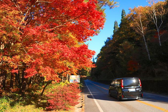 一度は走りたい!岐阜「ひるがの高原・せせらぎ街道」紅葉ドライブ