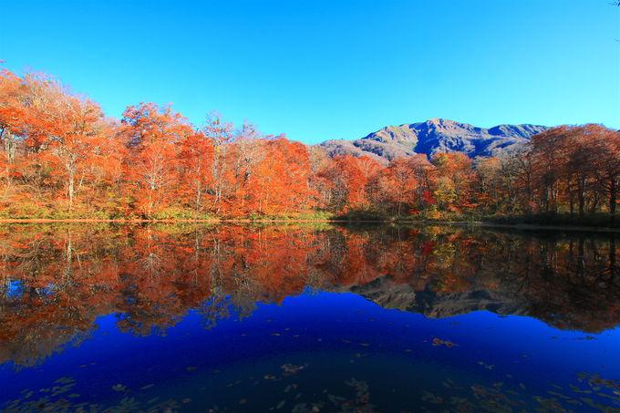 色彩溢れる水鏡!霊峰の麓・福井「刈込池」絶景紅葉ハイキング
